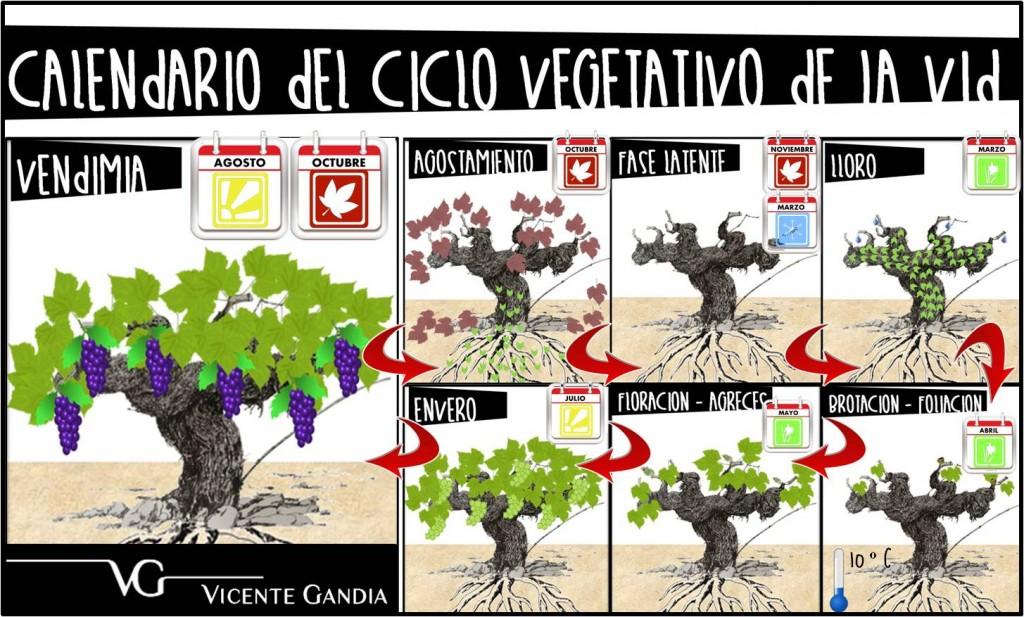 calendario-ciclo-vegetativo-vid